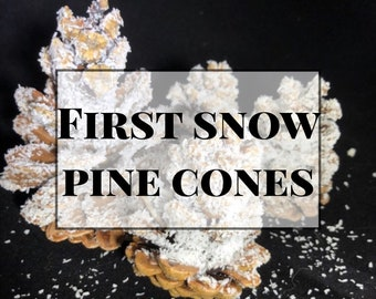First Snow Pine Cones
