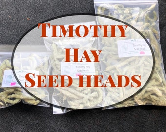 Timothy Hay Seed Heads- A Healthy Treat for Guinea Pigs and Rabbits
