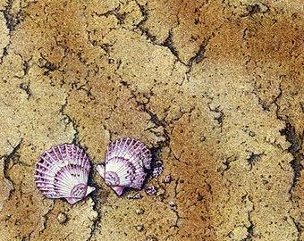Beach Shells | Fine Art Giclee Print