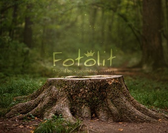 Stump digital backdrop, summer background, forest backdrop, grass backdrop, spring background, photoshop overlay, nature, instant download