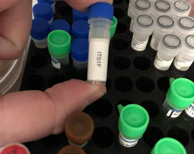 Fungal DNA Primers for PCR  / Sequencing