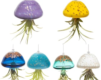 Hand Blown Art Glass Jellyfish with Life Air Plant/Tillandsia
