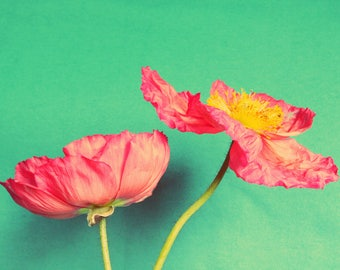 Poppies floral decor photography print