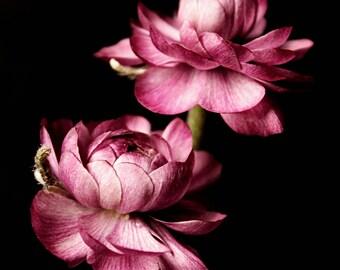 Dark botanical photography