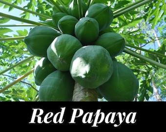 Dried PAPAYA SEEDS Dwarf Waimanalo Papaya Tropical Fruit Plant Maradol Seeds