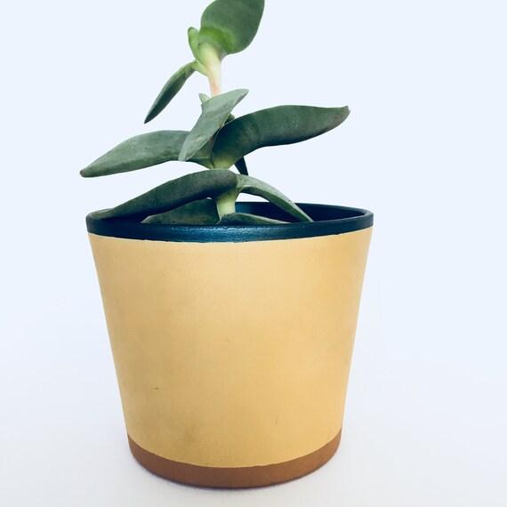 Peint En Terre Cuite Plante Pot Potjardinièrefleurplante Plante