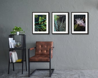 Poster print Cactus flower