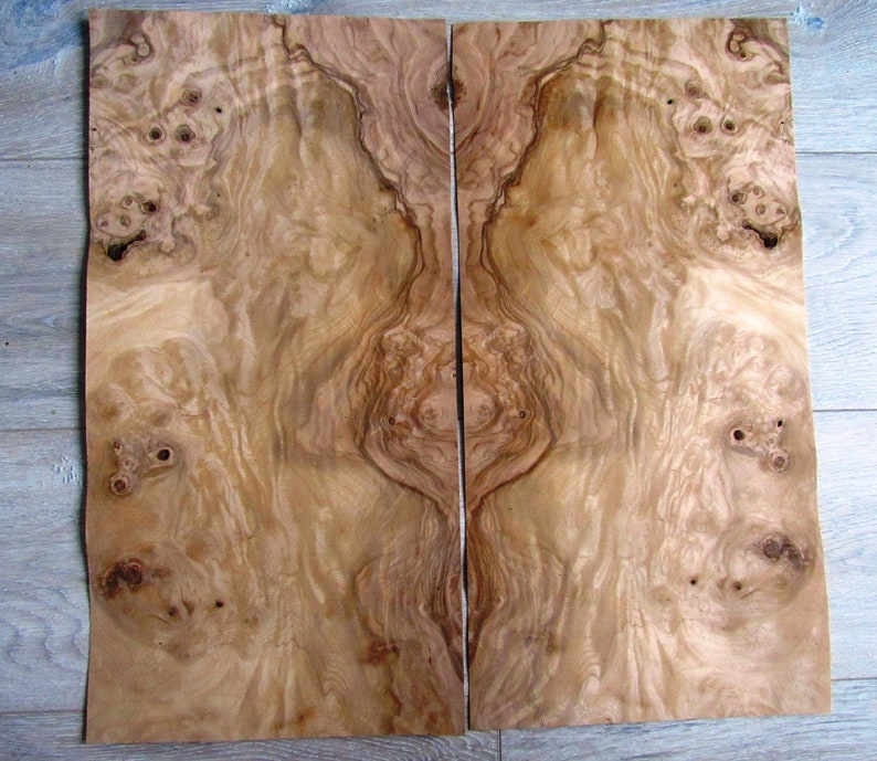 Olive Ash Burl Wood Veneer 1 Sheets 18 8 X 9 8 48 X 25cm 0 55mm 1 45