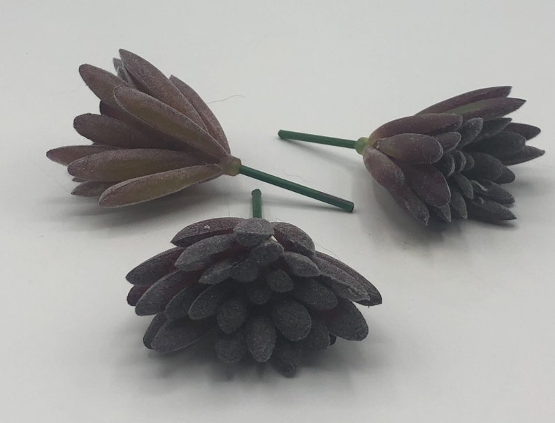 Tradescantia sillamontana 3 pot Chain Plant fairy garden xeric succulent plant Wandering Jew small purple succulent