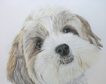 Coloured Pencil Commission of Your Pet