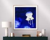 Mesmerising transparent jellyfish fine art print
