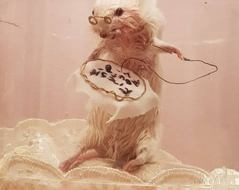 Taxidermy Mouse in a jar