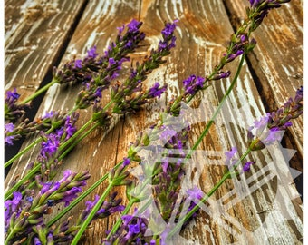 Lavender and wood grain, fine art, photograph.