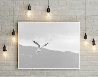 Jamaica, Wall Art Print, Fine Art, Wall Decor, Travel, Birds, Animals, Prints, Home Decor, Office Decor, Large, Poster, Art, Printed, Photo