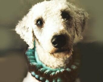 Ruffle Collar  - All Sizes, Knitting Pattern