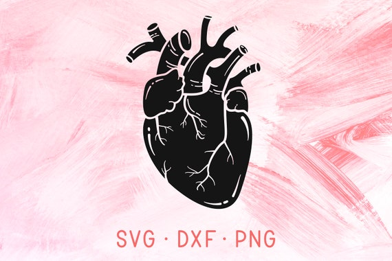 Anatomical Heart Svg Dxf Png Human Heart Svg Cutting File Etsy