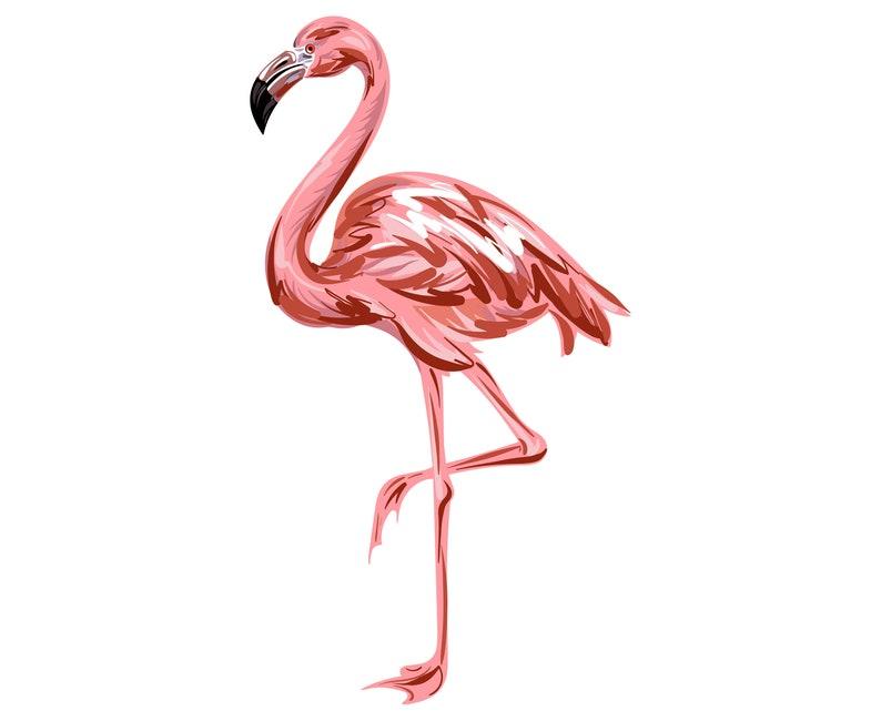 Fenicottero Rosa Silhouette SVG grafica illustrazione  2ab15c902607