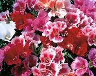 Godetia- Tall Mix- Grandiflora- 100 Seeds