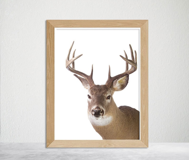 graphic about Printable Deer Antlers referred to as Deer Nursery Wall Artwork, Printable Deer Antlers Print, Woodland Nursery, Woodland Animal Print Deer Intellect, Nursery Wall Artwork, Woodlands Wall Artwork