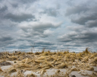 Dune grass with stormy sky.