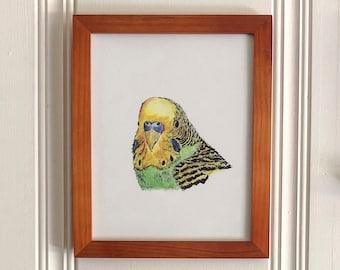 Parakeet, bird art print 8x10 Animal Watercolor Illustration, home wall decor