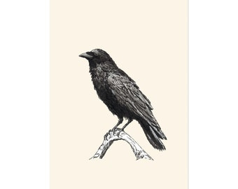 Raven M, art print 5x7 Animal Illustration, home wall decor