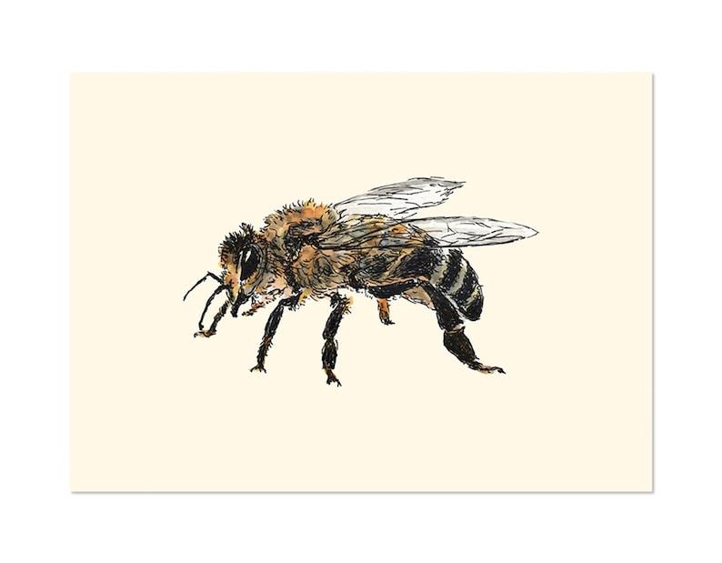Honey Bee art gift print 5x7 Animal Watercolor Illustration image 0