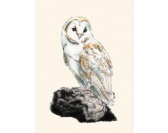Barn Owl, art print 5x7 Animal Illustration, home wall decor