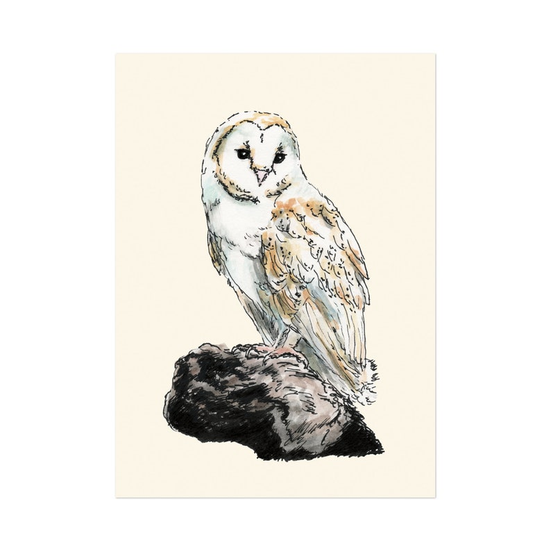 Barn Owl art print 5x7 Animal Illustration home wall decor image 0