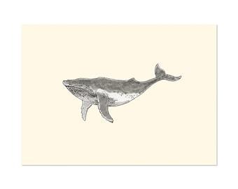Humpback Whale, art gift print 5x7 Animal Watercolor Illustration, home wall decor