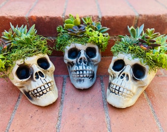 Skull Succulent decor -Halloween Succulent Arrangement - Halloween Decor
