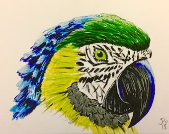 Parrot painting, original, hand painted