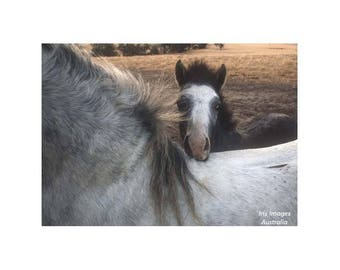 Mare & Foal GREETING CARD