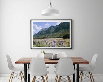 New Zealand Lupines