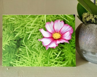 Electric Pink Greeting Card, Flower, Nature, Green, Flower Photography