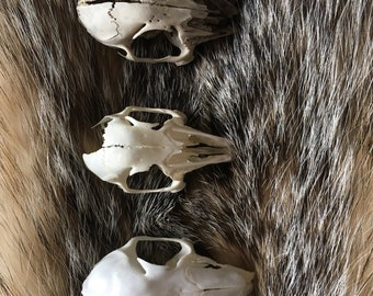 Threee various rabbit skulls individual or sold as a set