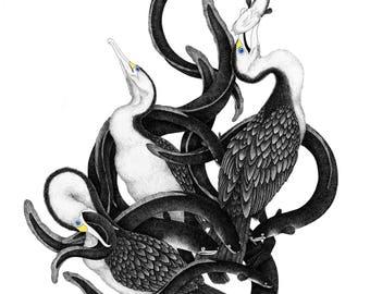 New Zealand Pied Shag and Longfin eel art print