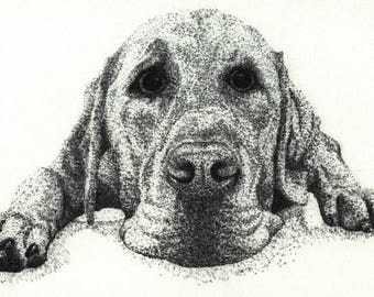 Cooper the Labrador charcoal - mounted print
