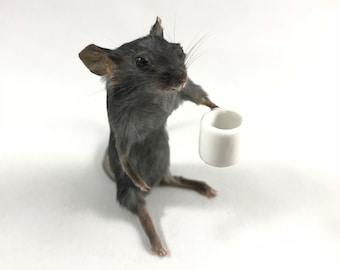 Coffee Mouse Taxidermy - Coffee Lover Taxidermy Mouse