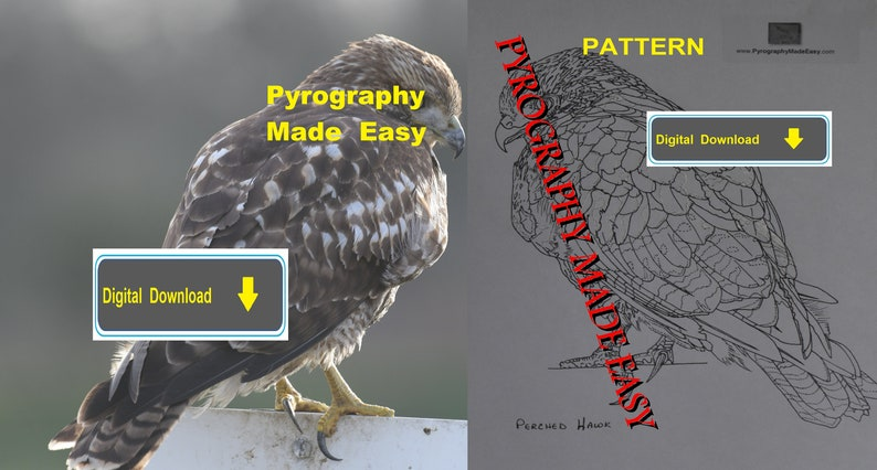 Perched Hawk Pyrography Pattern Wood burning pattern digital image 0