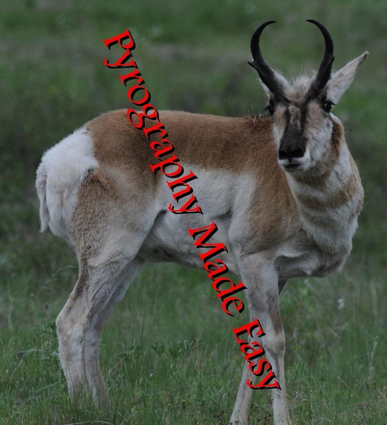 Pronghorn Antelope Pyrography Pattern Wood burning pattern digital download