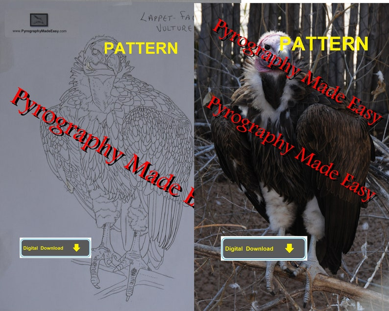 Lappet-Faced Vulture Pyrography Pattern Wood burning pattern image 0