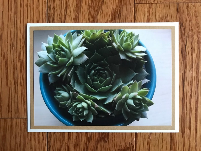 Potted succulent folded note card set with matching envelopes