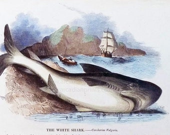 The White Shark - early print with original hand colouring