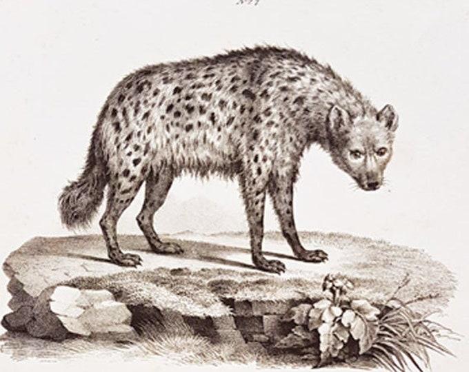Brodtmann's Naturhistorische Bilder Gallerie aus dem Theirreiche - Two hyenas
