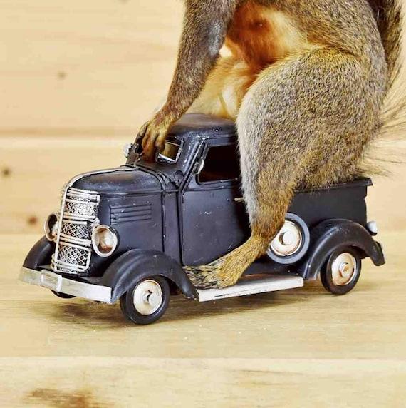 Squirrel Driving Black Vintage Truck Sw5585 Novelty Etsy