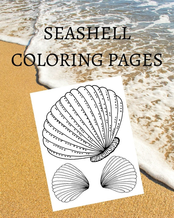 Seashell Coloring Pages 10 Printable Colouring Pages