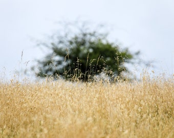 Distant, a mounted Giclee print of a tree on the horizon seen through tall grass.