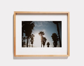 Venice Beach Palm Trees Photograph