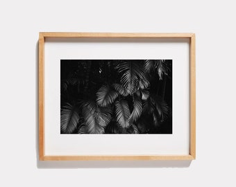 Black + White Palm Branches Photograph